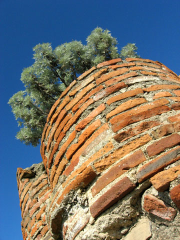Cumae: Plants growing at the top of a column of bricks
