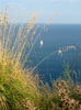 Porto Ercole: A sailboat, seen from above through tall grass