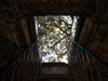 Lucca: Looking up the staircase of the Torre Guinigi at the trees growing on top