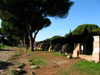 Ostia Antica: Trees along the Decumanus Maximus