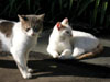 Naples: Stray cats in Naples