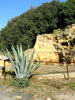 Cumae: A plant (agave americana?) growing in the ruins